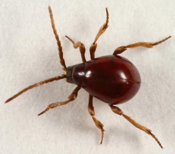 Top 5 Bugs That Are Mistaken For Bed Bugs