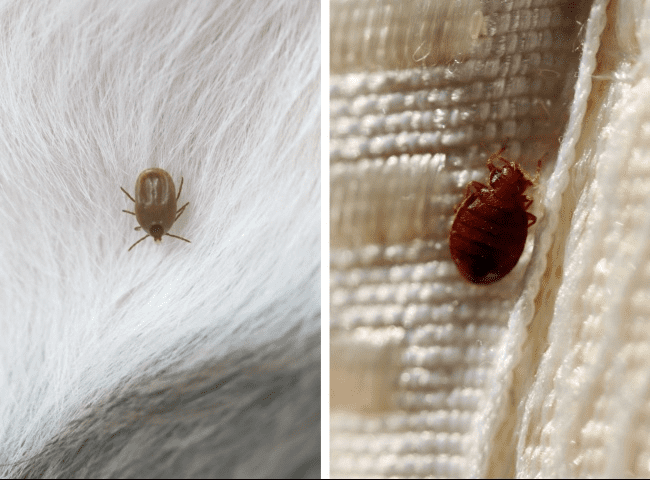 Ticks (left), Bed Bugs (Right)