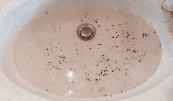 Bed Bugs in a Sink